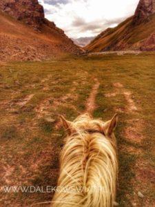 koniem przez Tash Rabat