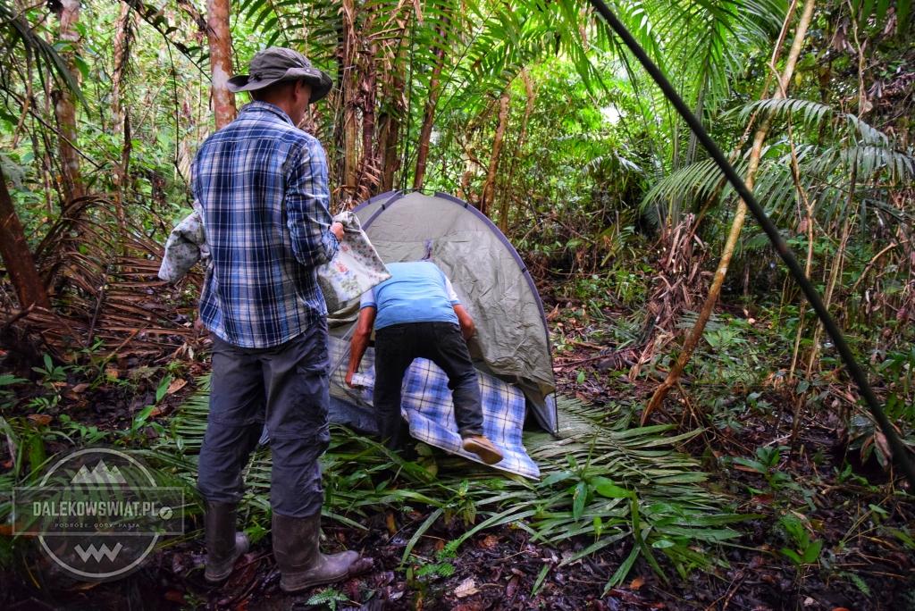 PRzygotowywanie namiotu w dżungli