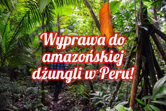 Amazońska dżungla w Peru - wszystko o organizacji wyprawy