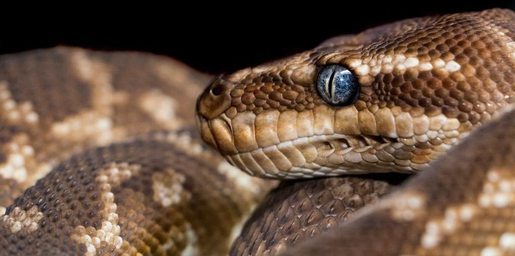 Ugryzienie węża w terenie - jak się zachować?